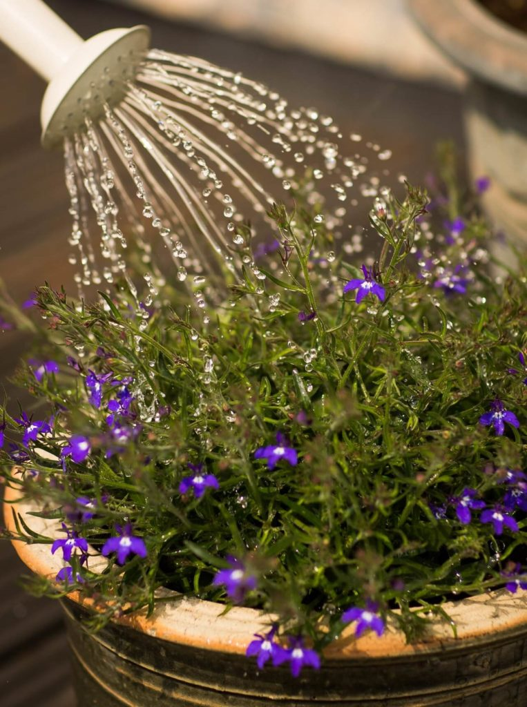 Watering your garden in the evening with rainwater will save a lot of water.